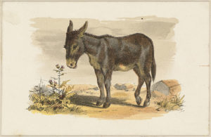 Donkey, Boston Public Library