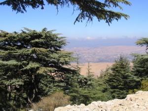Lebanon Cedars, Lebanon