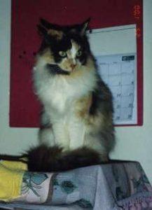 Maggie: RIP - 1990 - 23 April 2006