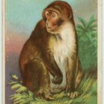 Not only did humans evolve from monkeys, but we ARE monkeys